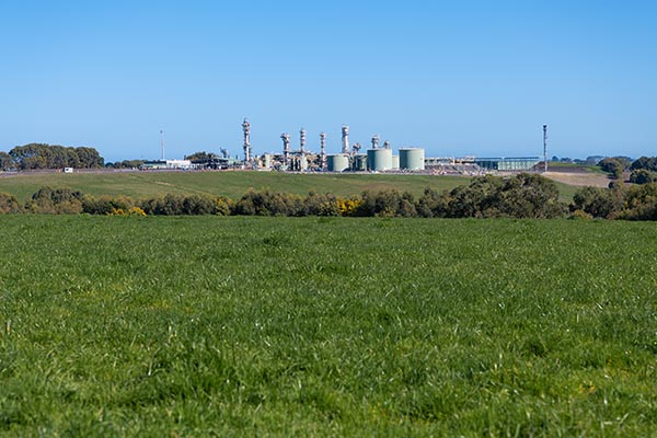 Lush green grass pasture with Otway Gas Plant in the distant skyline